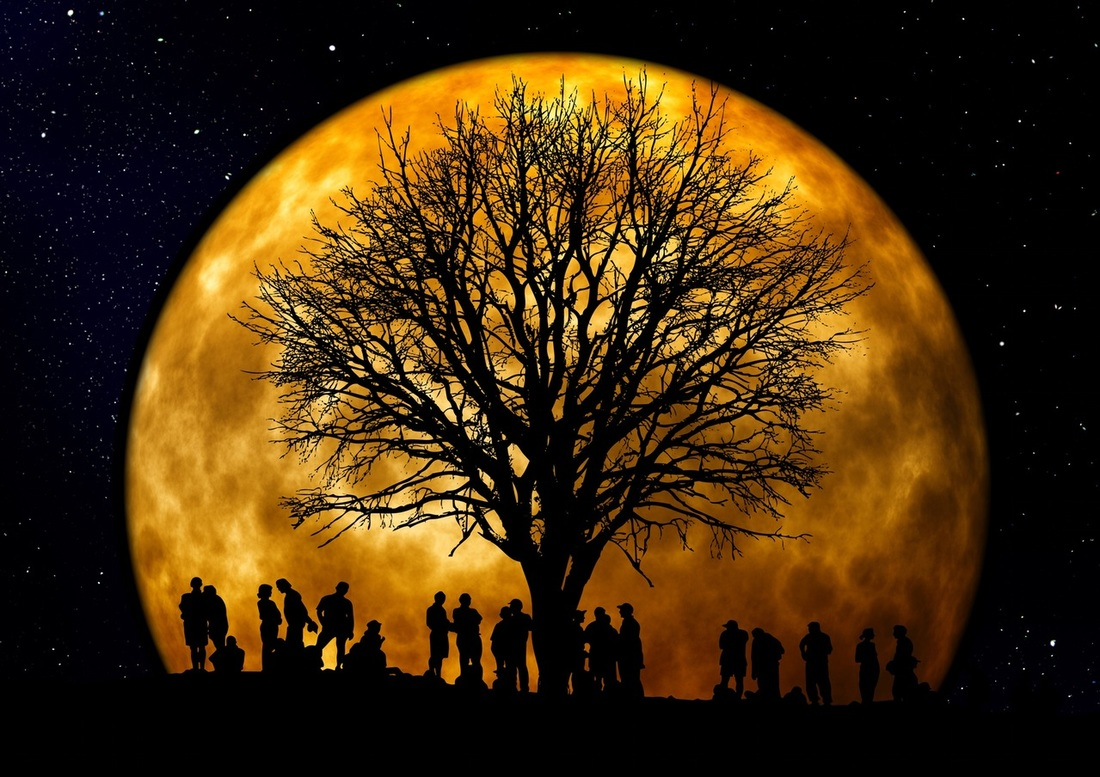 Weave a New Web of Life Together! Full Moon in Taurus 11/14